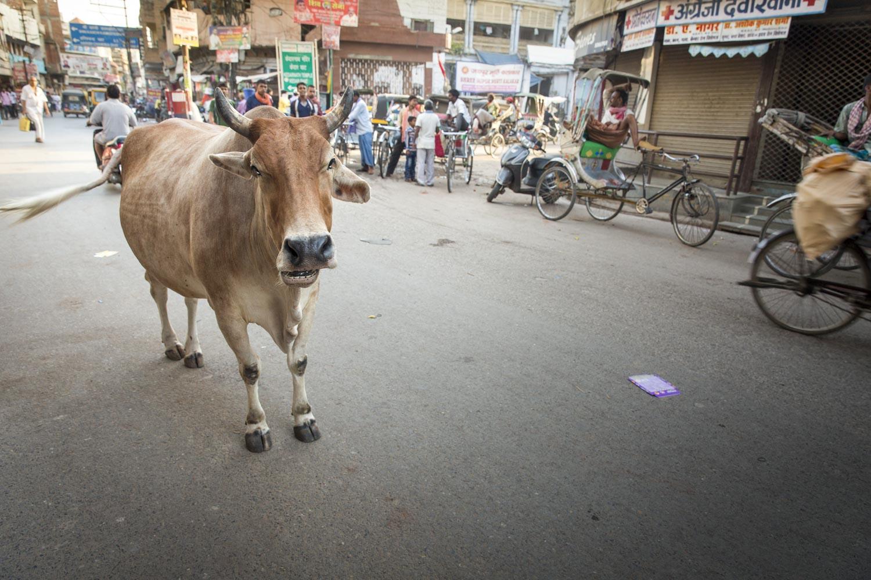 Varanasi India-25